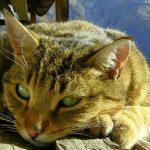 El misterioso poder de los gatos: seres protectores, espirituales y sanadores