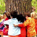 Descubrí la energía de los árboles: su poder curativo, beneficios para la salud y especies sanadoras