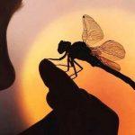 Las libélulas y su maravilloso significado espiritual