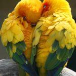 Los pájaros piensan, sienten, recuerdan, hacen regalos y aman