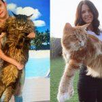 El simpático gato Omar: mide 120 centímetros y revoluciona las redes. La espiritualidad de los gatos