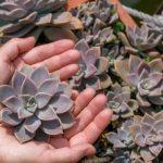 Suculentas: las plantas que acumulan y potencian energía en tu hogar. Consejos prácticos para cuidarlas