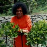 Enseñanzas de Sai Baba: «Así como siembran, así cosecharán. Esta es la Ley de la Naturaleza y el Secreto de la Creación»